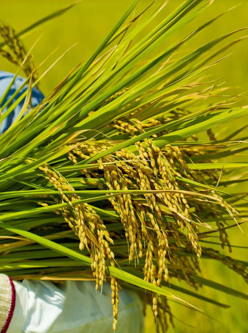 農業共済制度