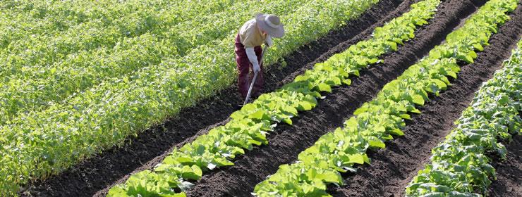 農業共済制度 フッターバナー