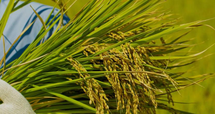 農作物共済 ヘッダー画像